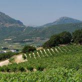 Weinland Griechenland