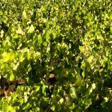 Andalusien: alkoholreiche Weine aus dem Süden Spaniens