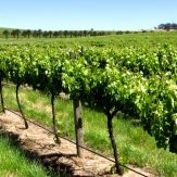 Weinregion Barossa Valley