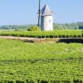 Weinbauregion Bordeaux
