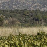 La Mancha: Spanischer Weingenuss