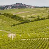 """Aus der Region Loire stammen etwa zehn Prozent der gesamten Weinproduktion Frankreichs. Das """"Val de Loire"""" erstreckt sich mit einer Rebfläche von 70.000 Hektar entlang des Flusses Loire"""