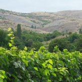 Makedonien: rote Weine aus dem Norden Griechenlands