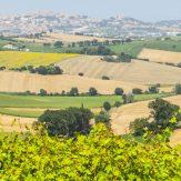 Marken: Rot- und Weißwein aus der italienischen Küstenregion