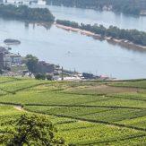 Weinanbauregion Rheingau