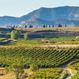 Rioja: Exzellente Cuvées