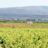 Utiel-Requena: spanische Weine mit ganz eigenem Charakter