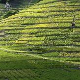 Wallis: Gletscherwein vom Südwesten der Schweiz
