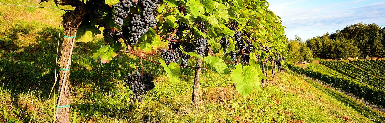 Eisenberg Weinbauregion Österreich