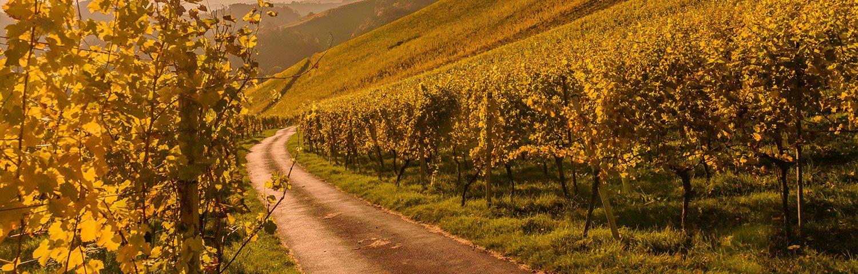 Leithagebirge Weinbauregion Österreich