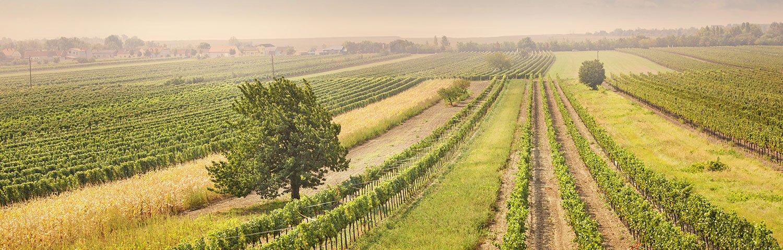 Mittelburgenland Weinbauregion Österreich