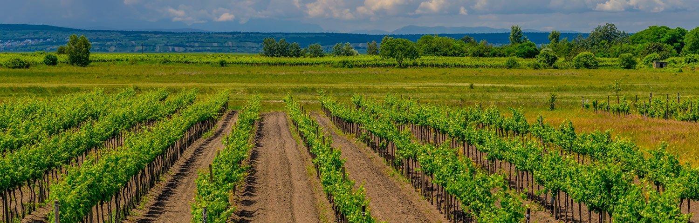 Neusiedlersee Weinbauregion Österreich