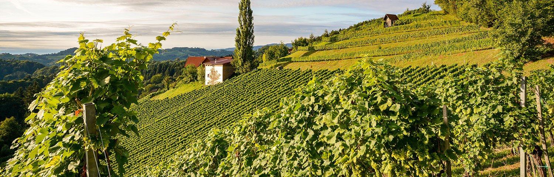 Südsteiermark Weinbauregion Österreich