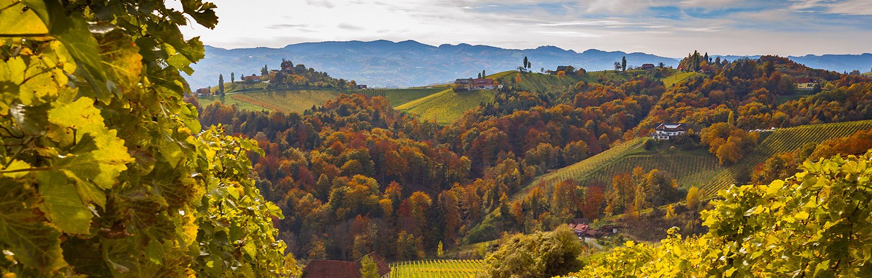 Vulkanland Weinbauregion Österreich