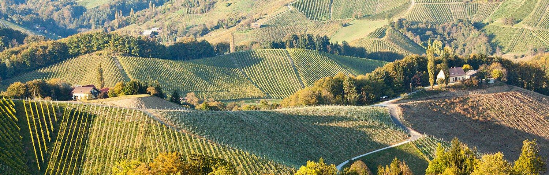 Weststeiermark Weinbauregion Österreich