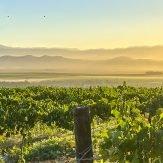 Weinland Südafrika