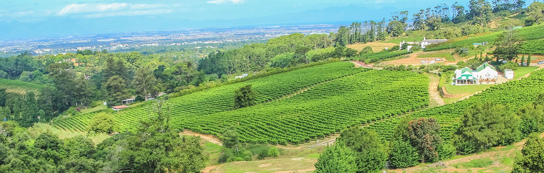 Weinland Südafrika Constantia