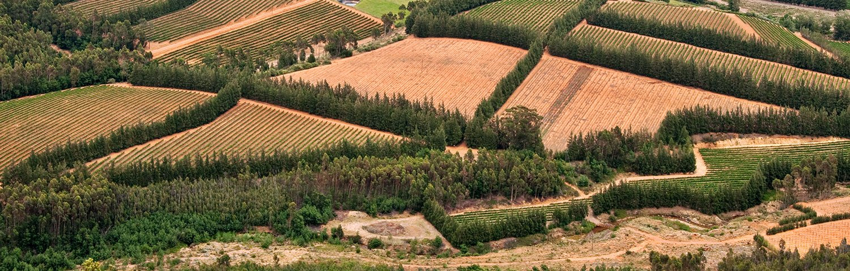 Paarl Weinland Südafrika