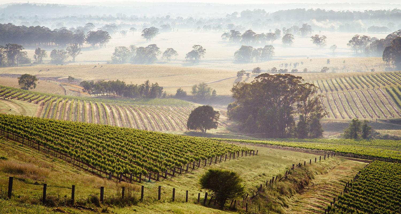 Weinlese_Hunter_Valley_Australien