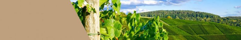 Premium Weine aus Österreich