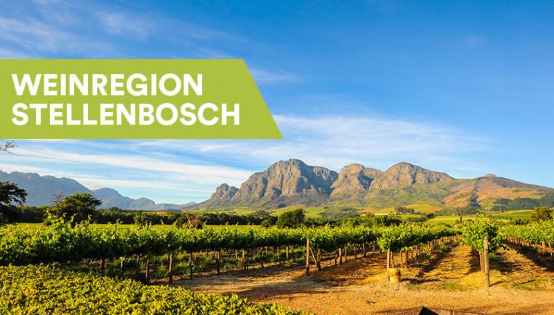 Weine aus Stellenbosch