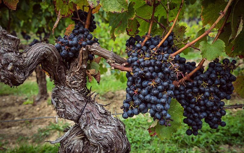 Klima und Wein Magazin Beitrag