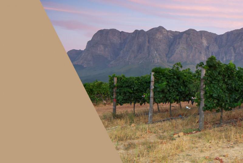 Premium Weine aus Südafrika