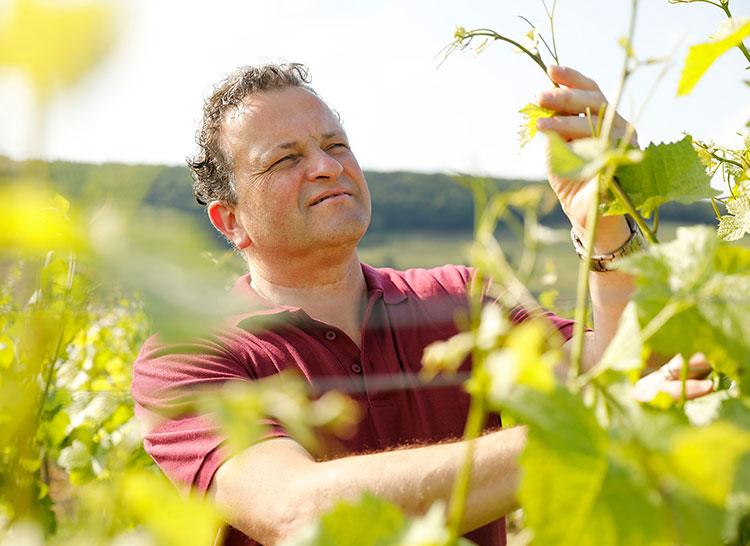 MEJS - Die Weinspezialisten