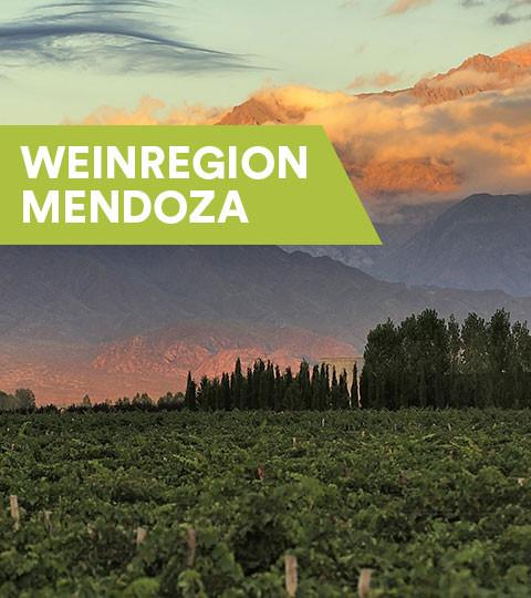 Weine aus Mendoza